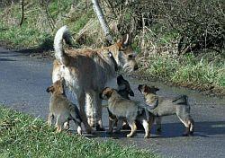 Felix mit seinen Kindern