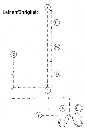 Leinenführigkeit Skizze